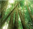 Bambusová přebalovací podložka 40 x 50 cm
