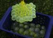Zuru Vodní balónková bitva s vrhačem