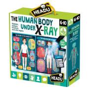 HEADU: Lidské tělo pod rentgenem