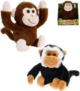 Veselá opice se zvukem