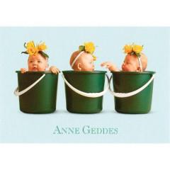 Blahopřání mini Anne Geddes - Zelená ve třech kbelících