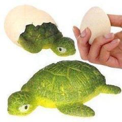 Líhnoucí se vejce želva