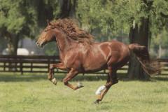 Puzzle Trefl Běžící kůň 1000 dílků 68x48cm